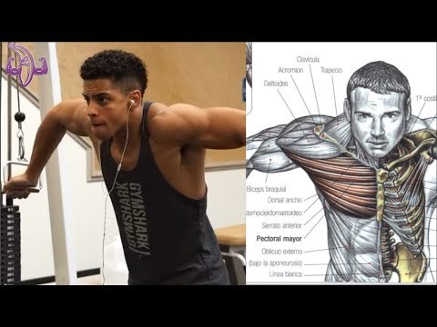 9 Ejercicios para Pecho, Hombros y ABS, 9 Exercises for Chest, Shoulders and ABS